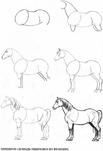Самые сложные элементы рисунка лошади